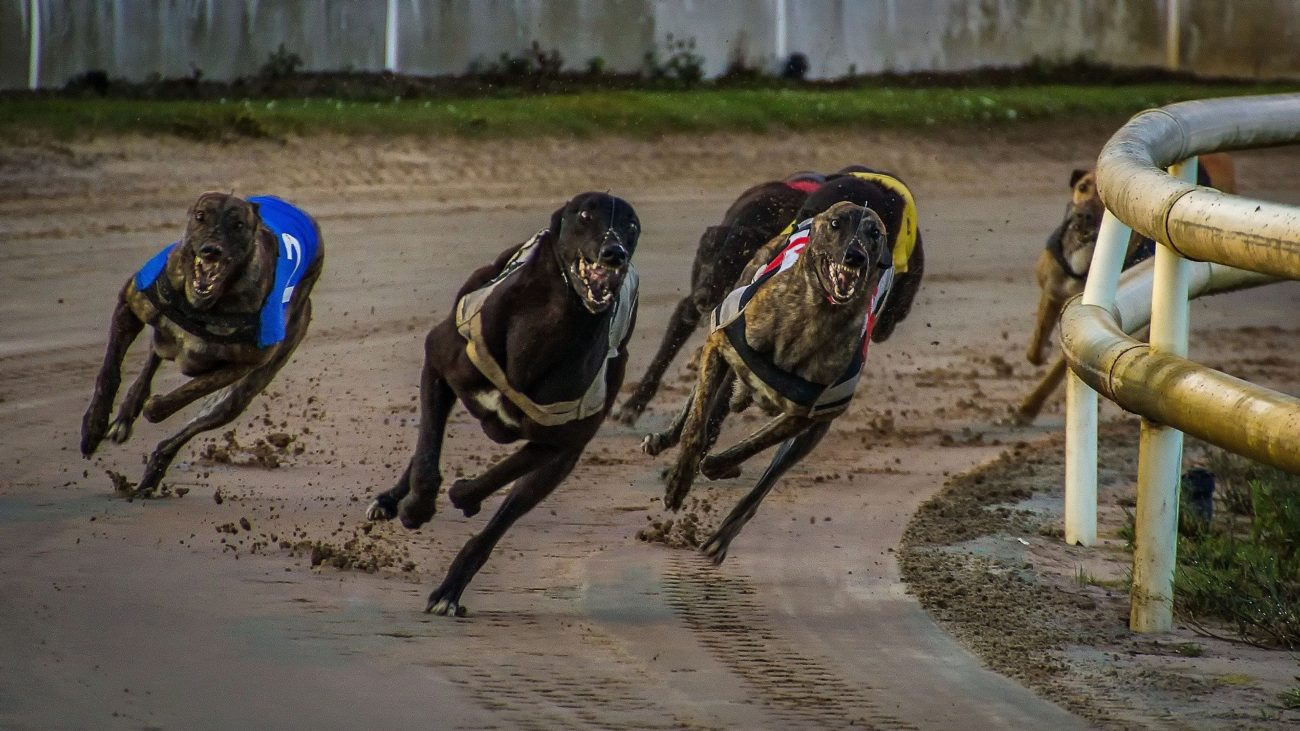 Uk greyhound racing betting postal 2 awp bitcoins