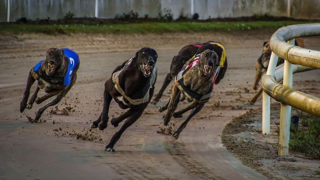 British greyhound racing moves behind closed doors - iGaming Business