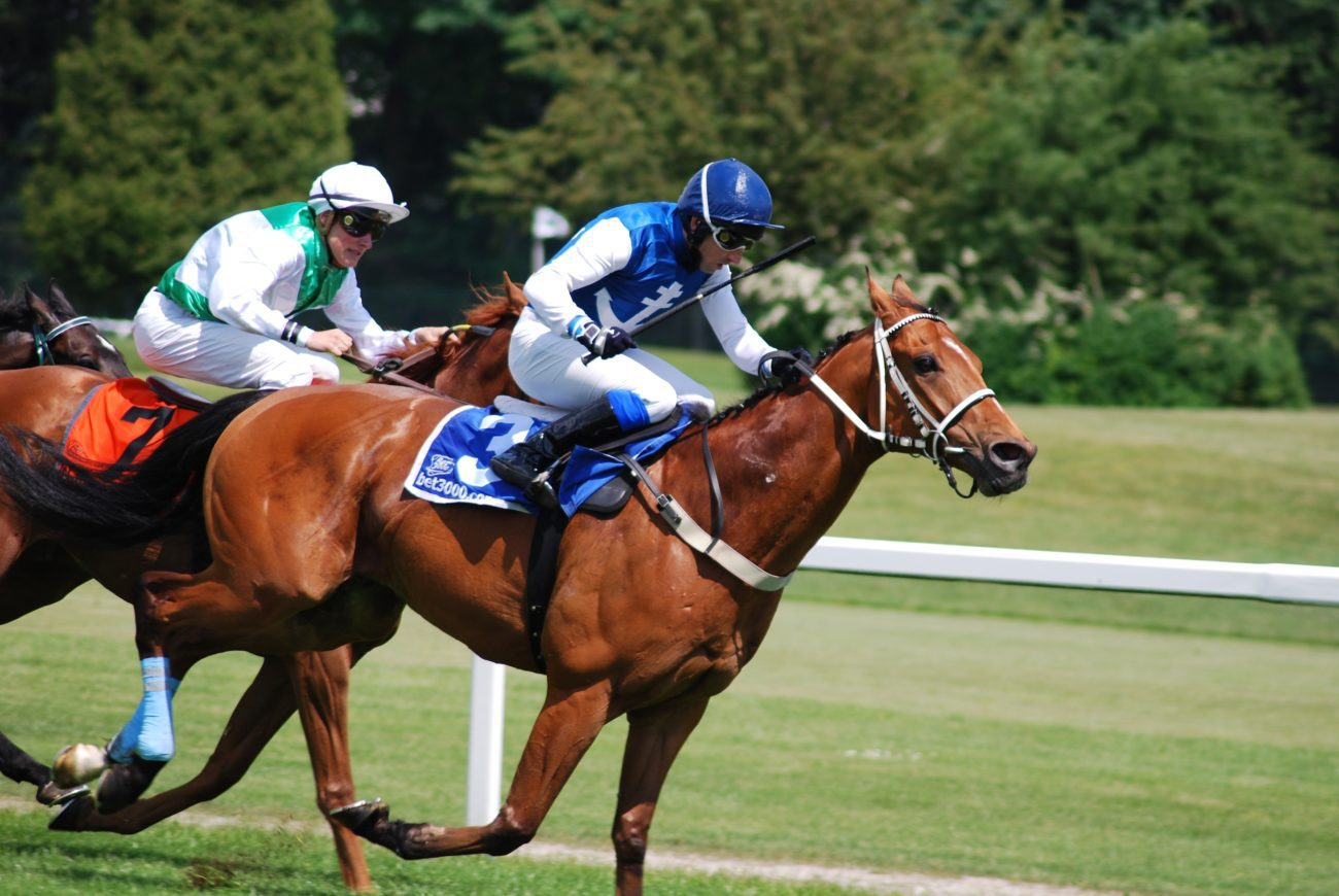 Horse racing betting new zealand ascot champions day betting tips
